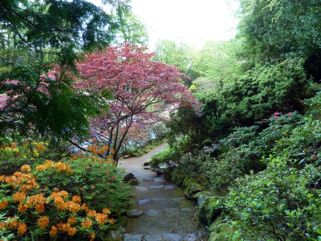 Back garden july 12th 7 aberdeen gardening - Back Garden July 12th 7 Aberdeen Gardening 15