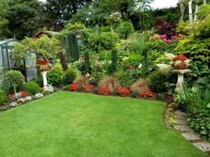 Back garden July 12th (7)