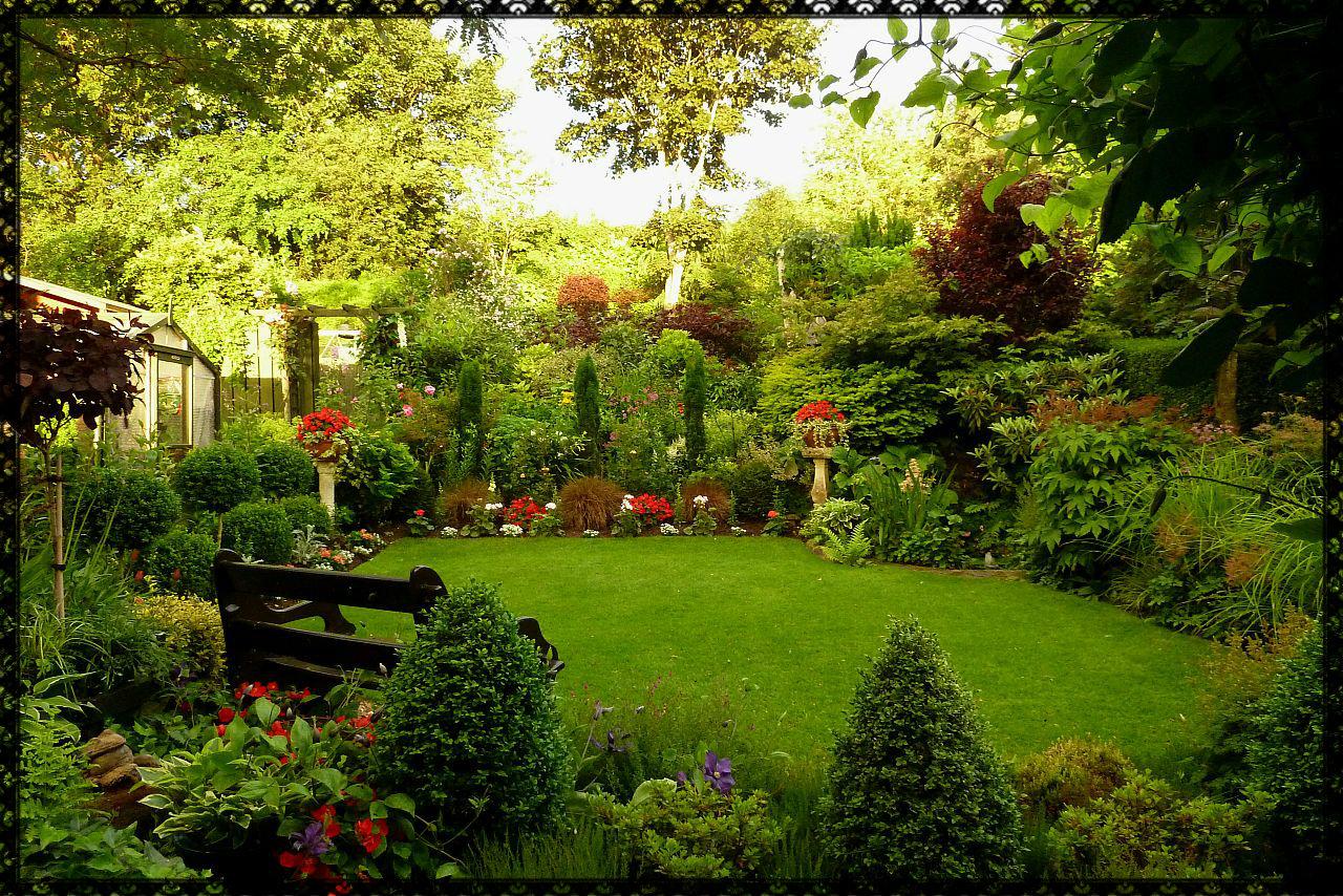 Thalictrum aquilegifolium thundercloud for Landscape my garden