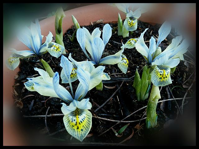 Iris Katharine Hodgkin