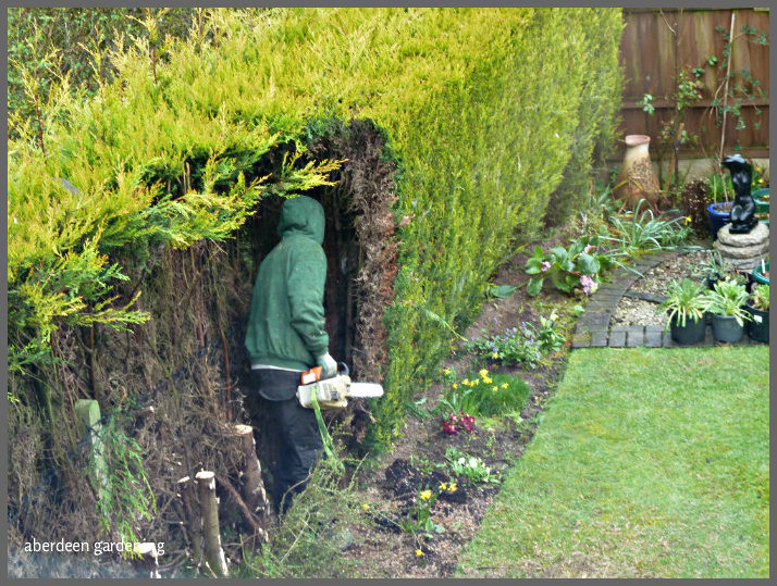 hedges that encroach onto a footpath badly resporting it. Black Bedroom Furniture Sets. Home Design Ideas