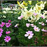 Back garden July24th (16)